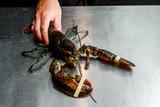 Kucharz trzyma surowy homar na stole pokrytym stalą. homar z bliska. Przestrzeń. Restauracja.
