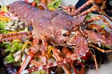 Żywy homar na tacy z sercami i sałatą