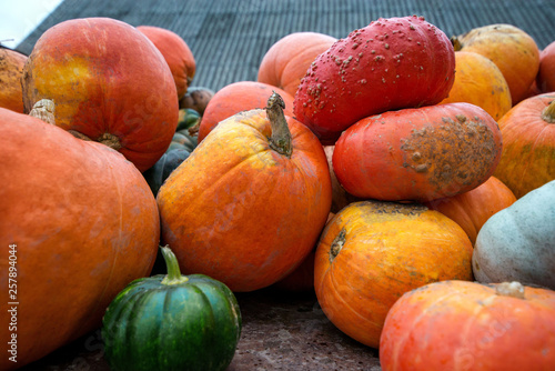 Trailer full of fresh pumpkins. Rich harvest in autumn or fall on farm in November. Beautiful, colorful autumn background. Preparing for Halloween. Delicious and healthy vegetables and fruits.  - 257894044