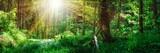 Fototapeta Fototapeta las, drzewa - Panorama Landschaft, Wald im Frühling mit Sonnenstrahlen durch die Bäume © Thomas Söllner
