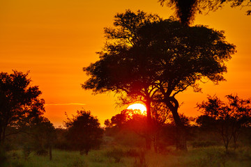 Sunrise at african savannah