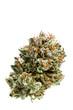 Leinwandbild Motiv LSD strain of cannabis