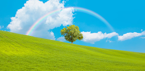 Beautiful landscape with green grass field and lone tree in the background amazing rainbow