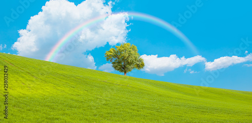 Beautiful landscape with green grass field and lone tree in the background amazing rainbow © muratart