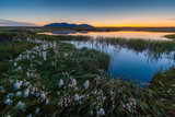 Evening landscape with a small lake in the tundra. On the lakeshore grows cotton grass. Far mountain and afterglow in the sky. The beautiful northern nature of the Arctic. Chukotka, Siberia, Russia.