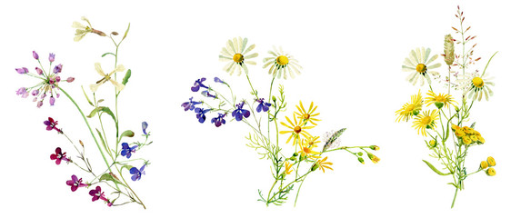 Watercolor multicolored bouquets of wild flowers © Olga M