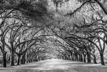 Wormsloe park, life oak tree alley, Savannah © Martina