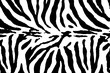 Black and white zebra pattern texture