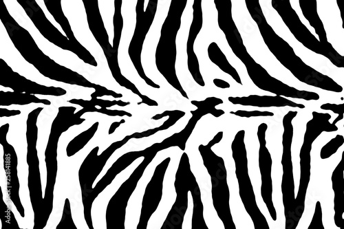 Black and white zebra pattern texture