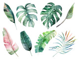 Watercolor leaves set. Hand drawn illustration. Isolated image - 258151875