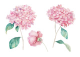 Watercolor hand drawn set. Flower hydrangea  and rose print. Botanical isolated design - 258152208