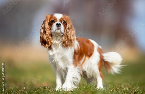 Portrait of a dog © Dyrefotografi.dk