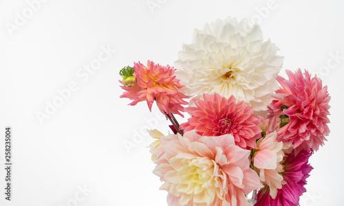 Dahlias flat lay on white background