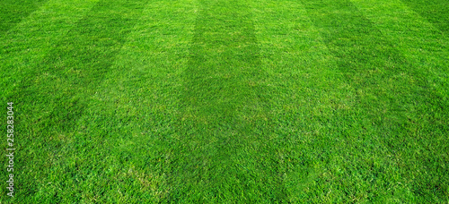 Leinwanddruck Bild Green grass field pattern background for soccer and football sports. Green lawn pattern and texture for background.