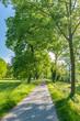 canvas print picture - Idyllischer Fußweg durch einen Park im Frühling