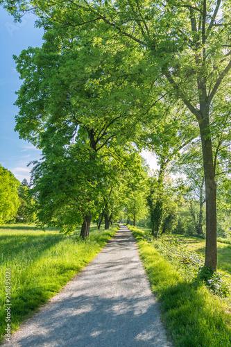 canvas print picture Idyllischer Fußweg durch einen Park im Frühling