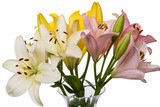 Bouquet of lilies in a vase