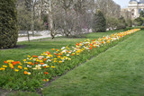 Allée fleurie de pavots au printemps