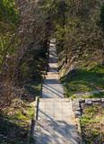 Fototapeta Forest - Dlugie, kamienne strome schody w lesie © Vanderbeck