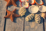 snails and starfish, on wooden background, background