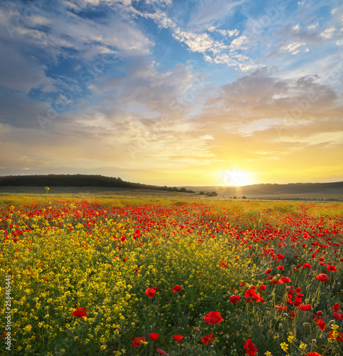 Spring flowers in meadow. - 258465443