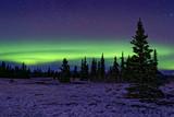 Northern lights on forests of Kluane National Park