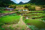 Maruyama Rice Terraces, Mie, Japan