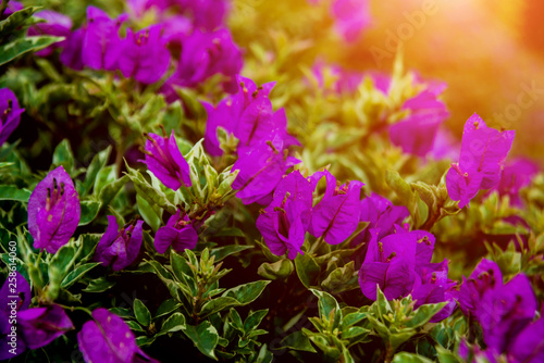 Abstract colored background close up. Macro. - 258614060