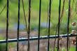 canvas print picture - Pflanzen Schlingen Gitter Zaun Focus 1