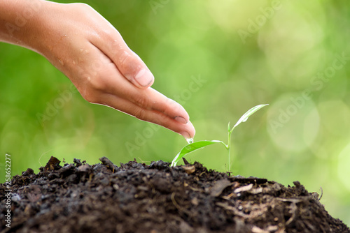 Leinwandbild Motiv Water drop from little hand to young seedling