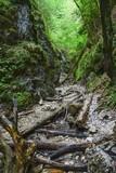 Canyon of creek Sucha Biela. Slovak Paradise. Slovakia. Europe.