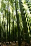 Fototapeta Bambus - SONY DSC © 寿男 梅川