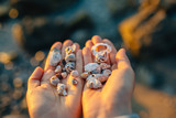 hand holding seashell on beach - 258676415