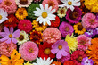 floral background, top view. garden flowers.