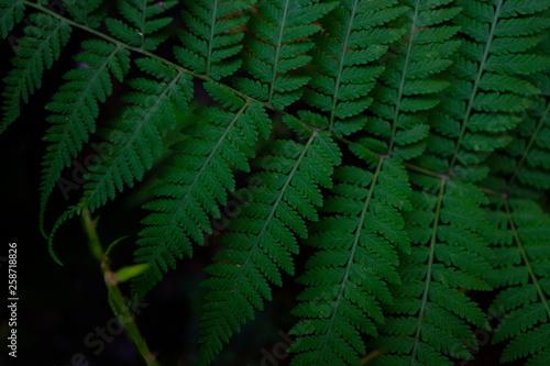 Green fern in black background