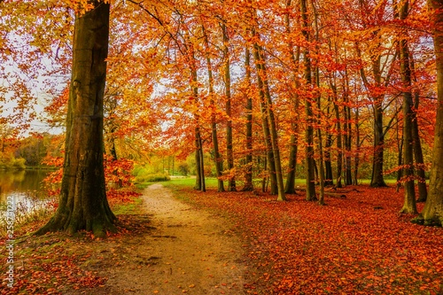 fototapeta na ścianę Leaves and trees at autumn in Germany