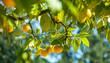 canvas print picture - Zitrusfruechte