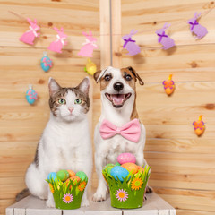 Cat and dog with easter eggs © Tatyana Gladskih