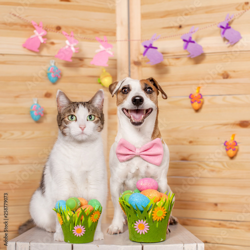 Cat and dog with easter eggs