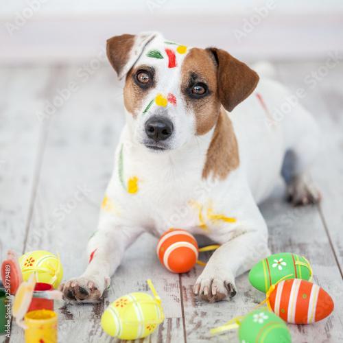 Leinwandbild Motiv Dog with painted Easter eggs