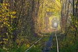 Fototapeta Fototapeta las, drzewa - Autumn landscape with railway in woodland © firewings