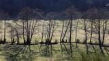 Fototapeta Fototapeta las, drzewa - arbres au bord d'un ruisseau © Jacky Jeannet