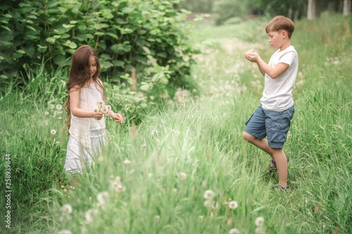A boy with a girl playing in a field with dandelions. - 258939844