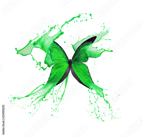 green butterfly in paint splash isolated on a white background © yurakp