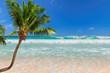 Coco palm on sunny beach in Caribbean island
