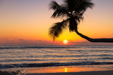 Beautiful sunset over the sea with coco palm on the beach in Caribbean island