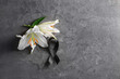 Leinwandbild Motiv Black funeral ribbon and flowers on grey background