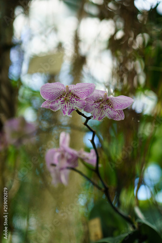 Pink orchid on green leaves sunny background