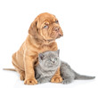 Mastiff puppy embracing kitten and looking away. isolated on white background - 259133898