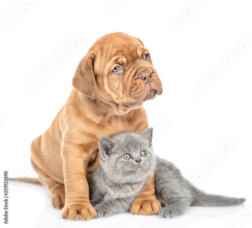 Mastiff puppy embracing kitten and looking away. isolated on white background © Ermolaev Alexandr